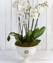 Fabulous Luxury Orchid Planter