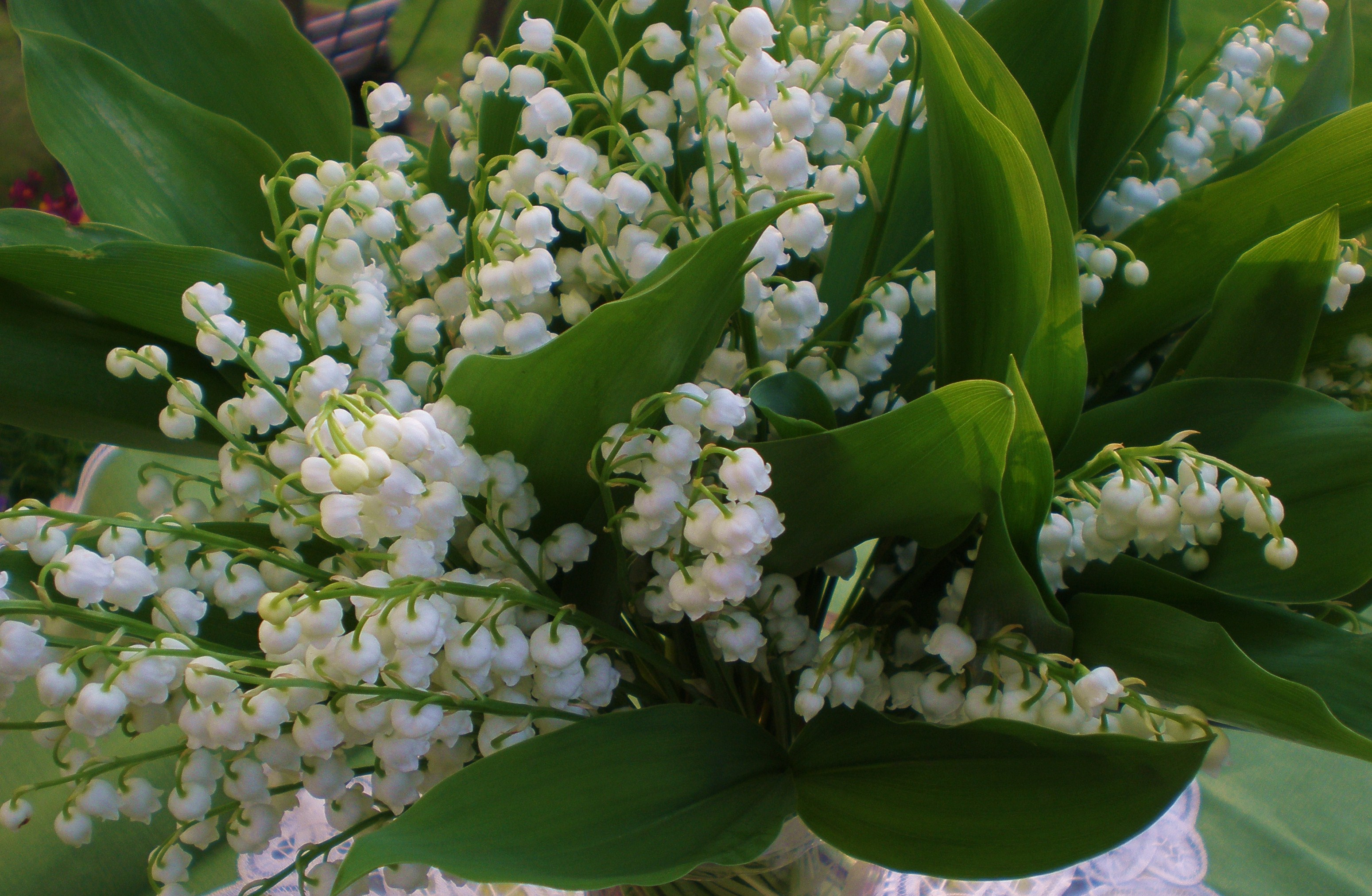 Helpful Hints And Tips Fabulous Flowers